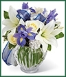 The Miracle's Light Hanukkah Bouquet celebrates each miraculous moment of this festive and meaningful holiday with its abundance of beautiful blooms. Blue iris creates a splash of color against a backdrop of white roses and white Asiatic lilies accented with lush greens, silver pinecones and blue and silver organza ribbon, gorgeously situated in a clear glass ginger jar vase to create a luminous gift they will treasure throughout the eight days and nights of the Hanukkah season.