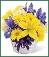 Capture the Spirit of Spring with this traditional bouquet. A handled bamboo basket holds bold purple iris and statice that defer to lemon yellow Asiatic lilies, soft yellow carnations and bright yellow daisy poms. It's the perfect petite basket to celebrate any occasion.