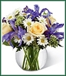 The Sweet Beginnings Bouquet exudes the promise of each day's potential with its unlimited beauty. Deep purple iris mingles with pale yellow roses, white traditional daisies, Queen Anne's Lace and lush greens to create an incredible look. Arranged in a clear glass bubble bowl vase, this bouquet is full of warm wishes and sweet sentiments.